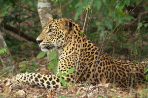 Wilpattu-National-Park (1)